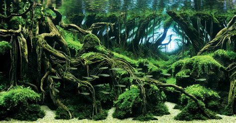 Aquascape Plants by Awesome Aquariums Winners Of The 2015 International
