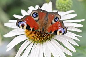 Bedeutung Schmetterling In Der Wohnung : die farbe schmetterling sitzt auf der blume stockfoto colourbox ~ Watch28wear.com Haus und Dekorationen