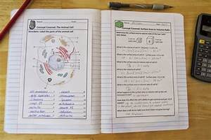 Amy Brown Science  Biology Interactive Notebooks