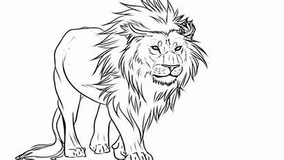 Lion Draw Coloring Drawing Easy Face Lions