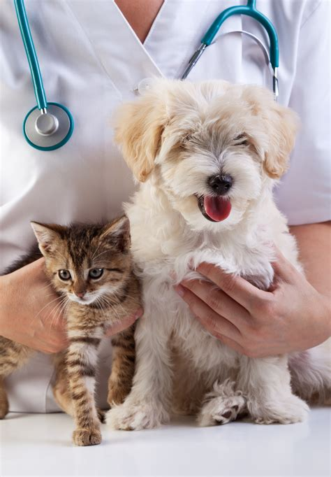 Paws Around Town Mobile Veterinary Hospital Veterinarian