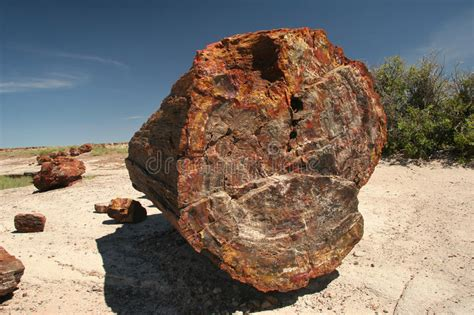 fossilized tree petrified forest national park stock