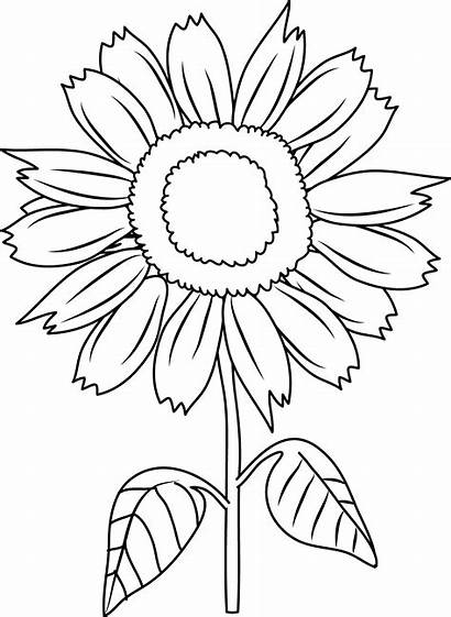 Sunflower Coloring Clip Pretty Line Sweetclipart