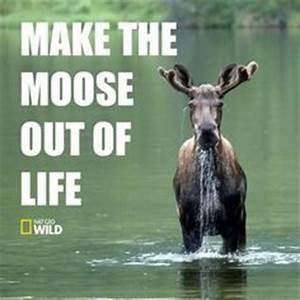 1000+ ideas abo... Elk Animal Quotes