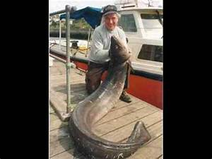 World Record HUGE EEL!!!! - YouTube