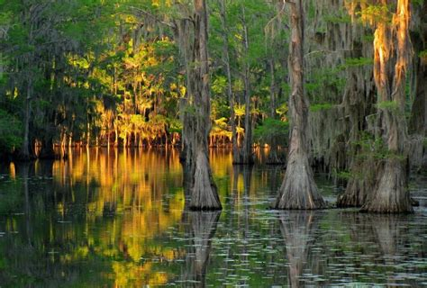 Caddo Lake Boat Rental by Cypress Trees Of Caddo Lake Feel The Planet
