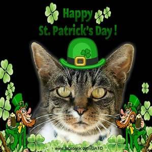 51 best images about Cats/St Patrick's on Pinterest