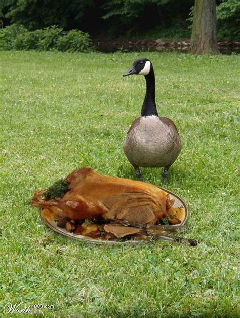 Image result for a picture of a cooked goose