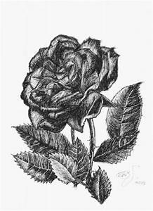 Bilder Schwarz Weiß Gemalt : bild rose schwarz wei tusche von juliane breit bei kunstnet ~ Eleganceandgraceweddings.com Haus und Dekorationen