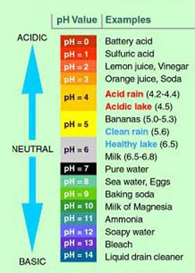 test  bodys ph   alkaline