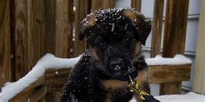 Check In Check Out Chart Animal Photos Of The Week German Shepherd Puppy Sees Snow