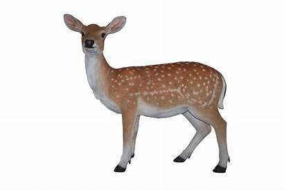 Clipart Deer Clip Realistic Transparent Head Webstockreview
