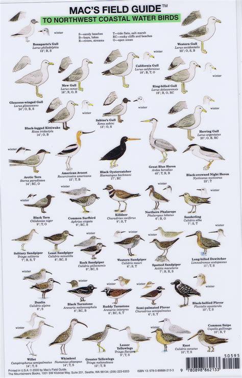 northwest coastal water birds mac s field guide