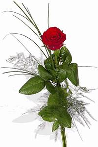 1 Rote Rose Bedeutung : rote rose 1 lange rote rose hab 39 dich lieb p204 blumenversand pflanzen shop blumen king ~ Whattoseeinmadrid.com Haus und Dekorationen