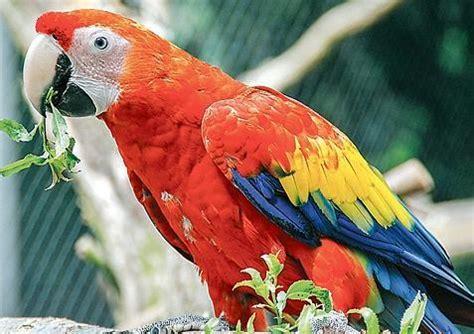 ausstellung nordenham papageien sittiche und  zeigen