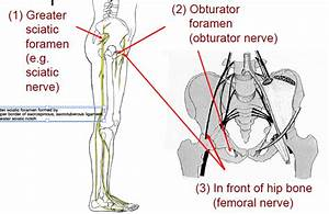 Lumbosacral plexus & nerve distributions at University of ...