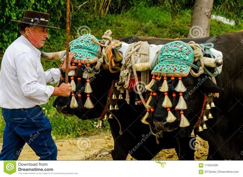 almayate andalusian contest spain april traditional preview ethnic farm