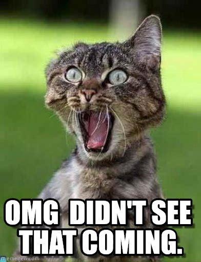 Omg Meme Omg Didn T See That Coming Screaming Cat Meme On Memegen