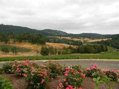 Picture Of Colene Clemens Winery, Newberg