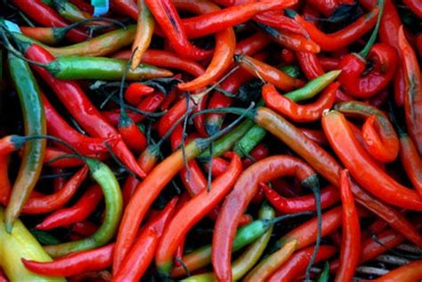 benefits of having hot peppers chili benefits speedy remedies