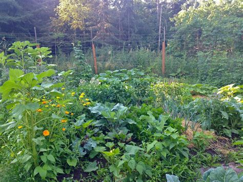 meal garden of why you need to grow food this year family food garden