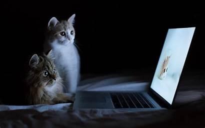 Laptop Cat Wallpapers Backgrounds Desktop Bed Lucu