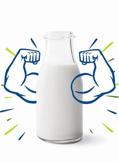 Milk Stronger Strong Foods Bodies Dairy Dean
