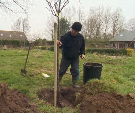 planter un arbre fruitier en pot planter un arbre fruitier en tige ou demi tige le magazine gamm vert