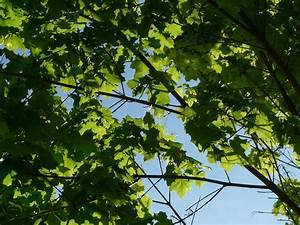 Bäume Für Balkon : b ume im garten ~ Michelbontemps.com Haus und Dekorationen