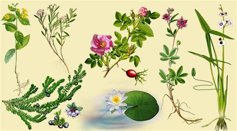 Pflanzen Für Die Küche by Illustrationen Naturtafeln Naturkundefolder