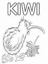 Kiwi Coloring Bird sketch template