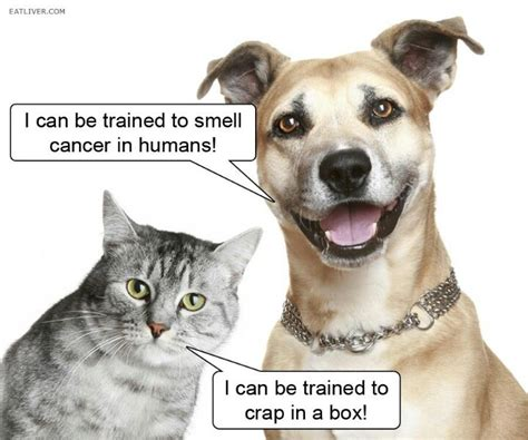 are dogs or cats better why dogs are better than cats a dogs world