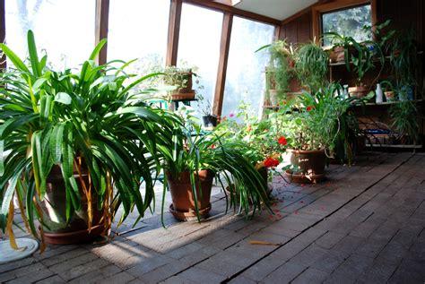 plante plein soleil en pot plante pour v 233 randa liste ooreka