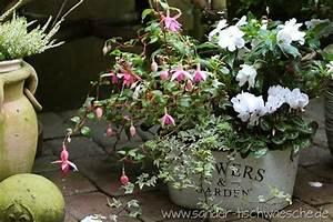 Efeu Pflanzen Kaufen : zinnk bel mit fuchsie efeu impatiens neu guinea und alpenveilchen herbst pinterest ~ Buech-reservation.com Haus und Dekorationen