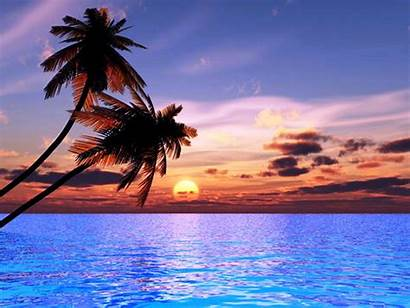 Sunset Pretty Backgrounds Trees Wallpapers Beaches Sunsets