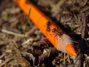 Ameisen Im Winter Finden : emsig wie ameisen stifte sammeln stifte stiften ~ Lizthompson.info Haus und Dekorationen
