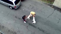 Bronx pit bull attack leads to arrest - CNN