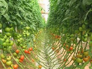 Abri A Tomate : agri souss la culture de tomate sous abri ~ Premium-room.com Idées de Décoration