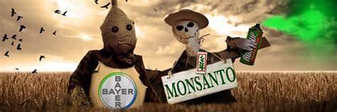 Bayer-Monsanto Bleeding Out…44% Drop!…