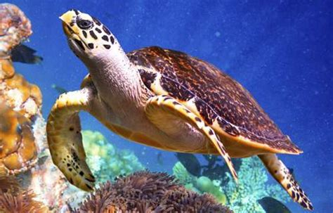 A Complete List Of The Different Types Of Turtles With