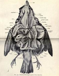11 Best Anatomical Images On Pinterest