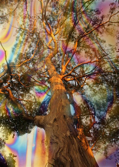 landscape psychedelic nature artists  tumblr