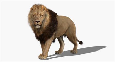 maya lion rigged fur