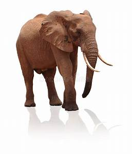 Elephant White Background   www.pixshark.com - Images ...