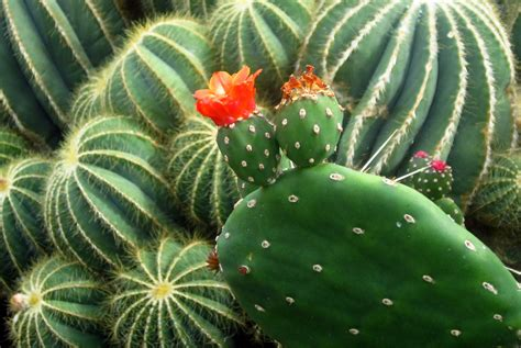 kew gardens cactus tom burley photography