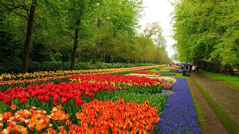 1920x1080 beautiful tulips garden flower garden d wallpaper 1920x1080 176823 wallpaperup