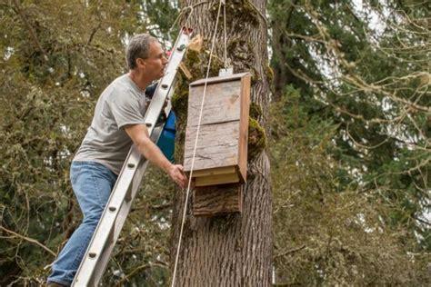 install a bat house oregon zoo