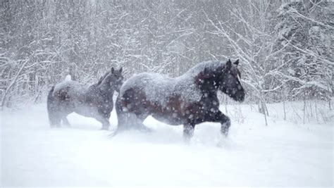 blizzard winter horses cold shutterstock