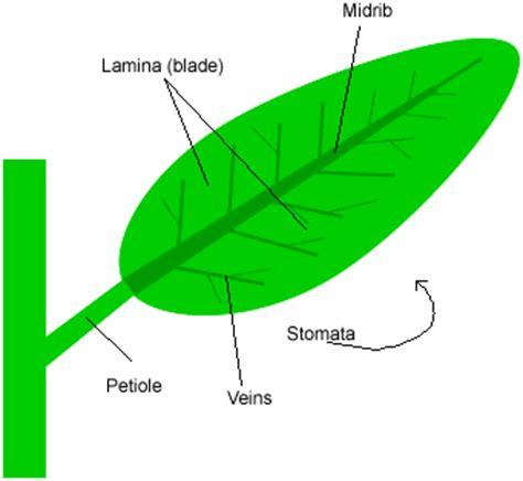 Leaf Part Diagram by Dynamic Students