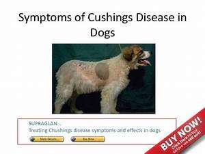 symptoms of cushings disease in dogs